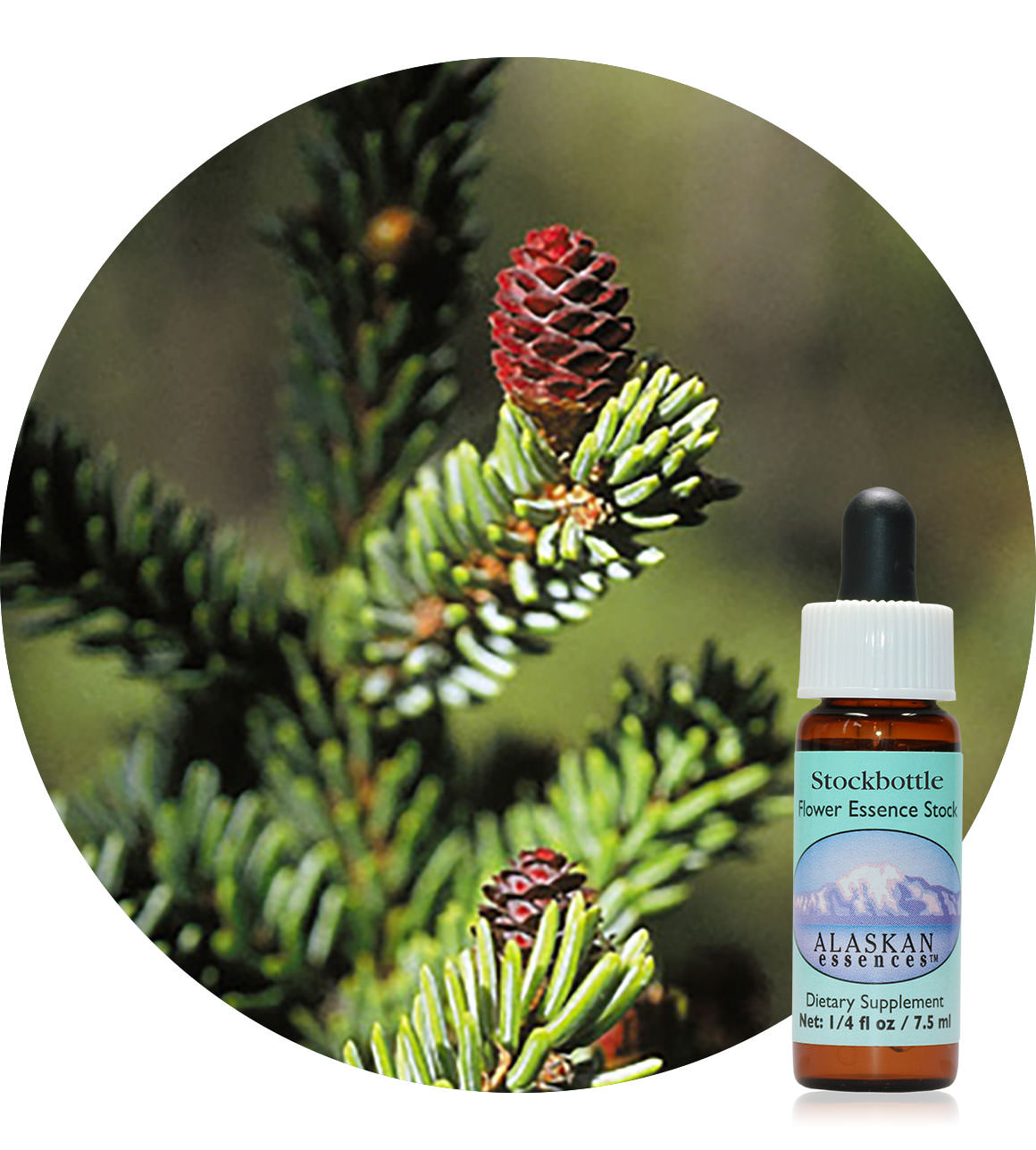 Black Spruce 7,5 ml