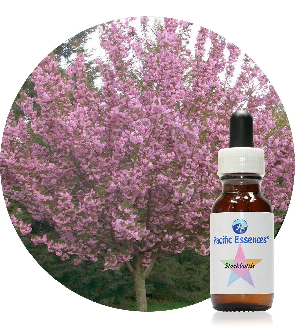 Cherry 25 ml