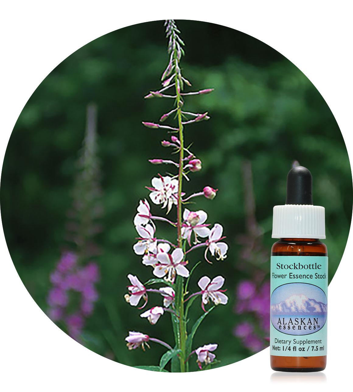 White Fireweed 7,5 ml