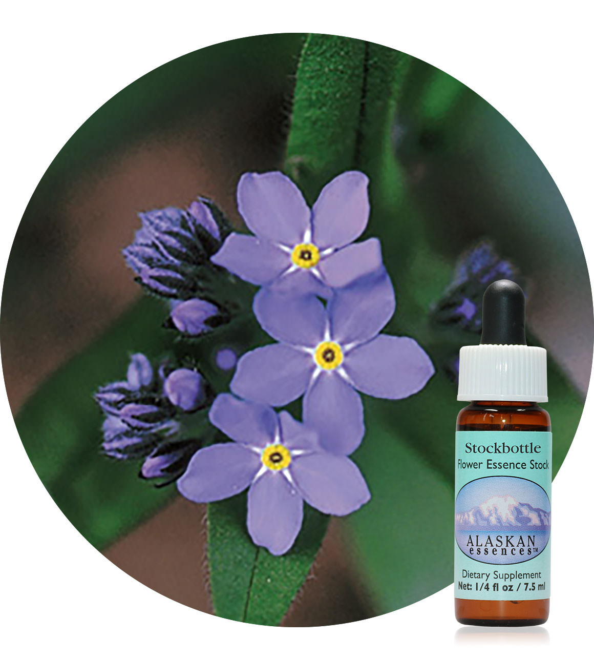 Forget-Me-Not 7,5 ml