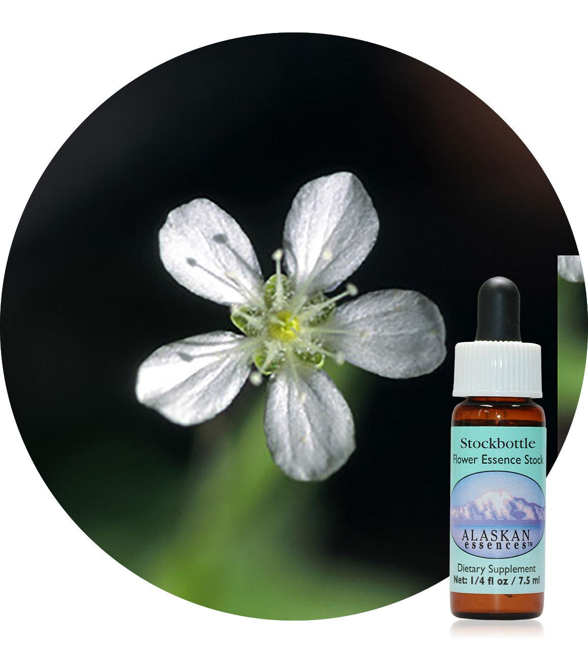 Grove Sandwort 7,5 ml