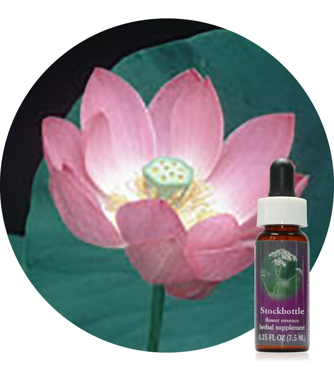 050. Lotus