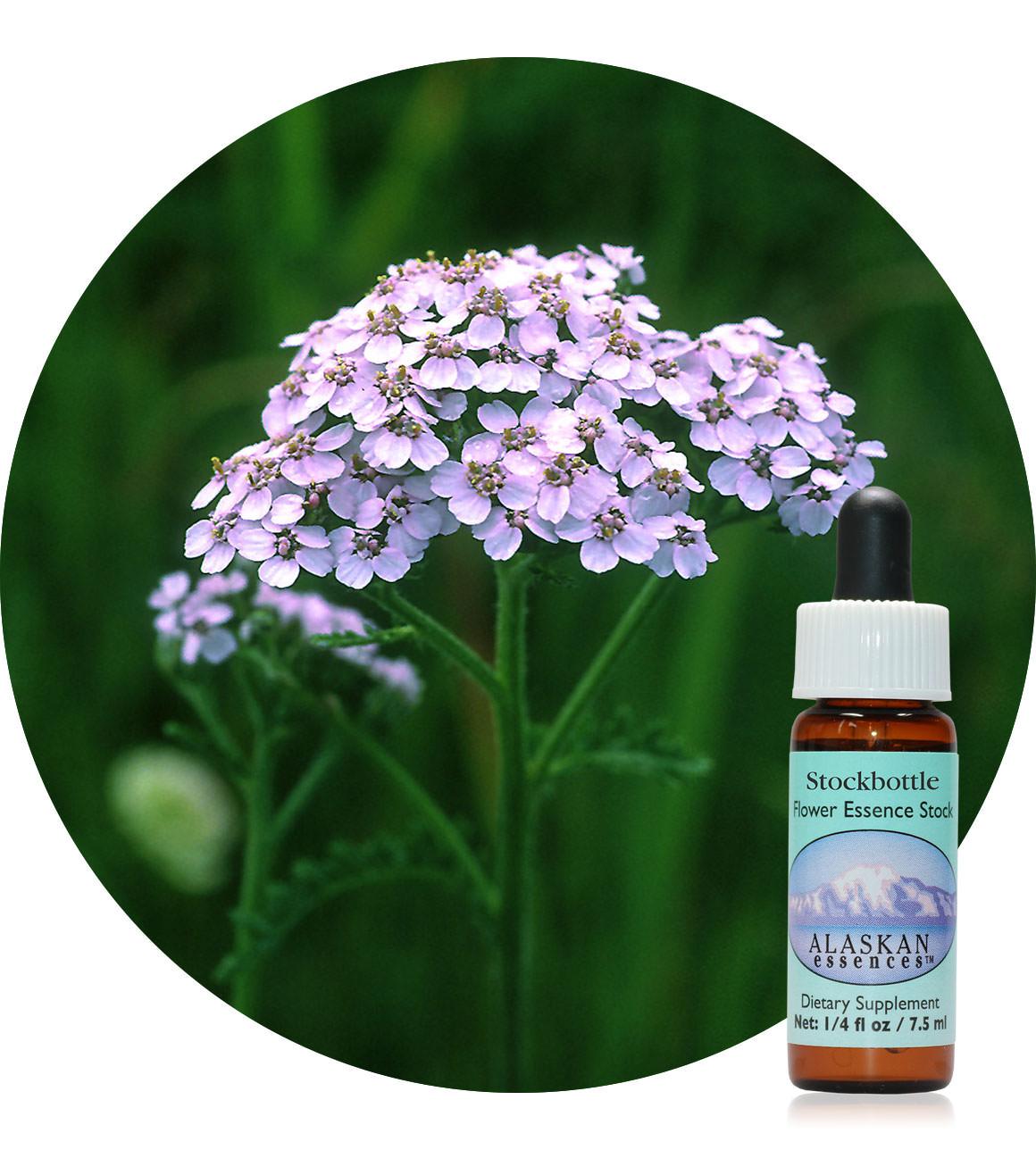 Lavender Yarrow (F) 7,5 ml