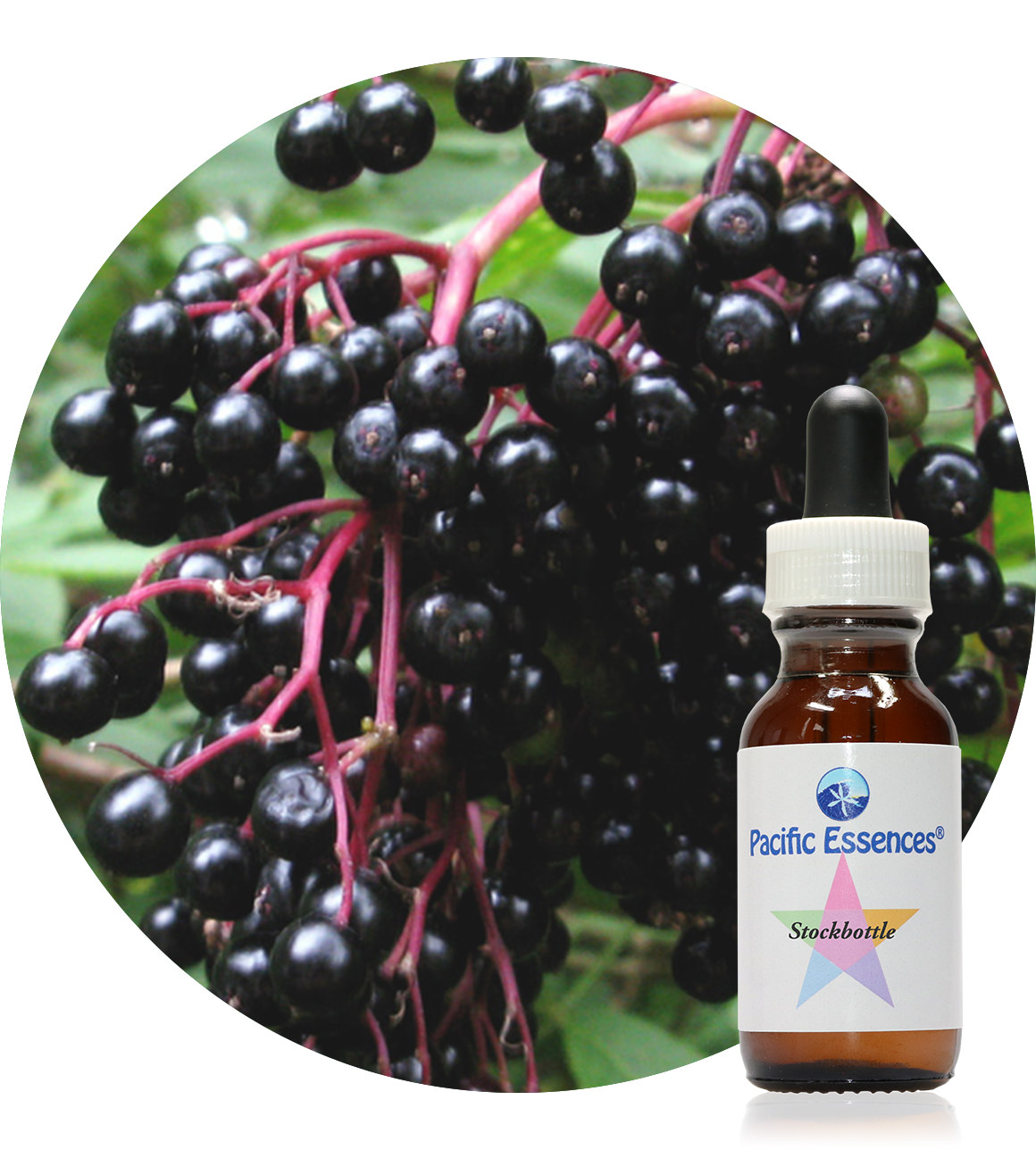 Elderberry 25 ml