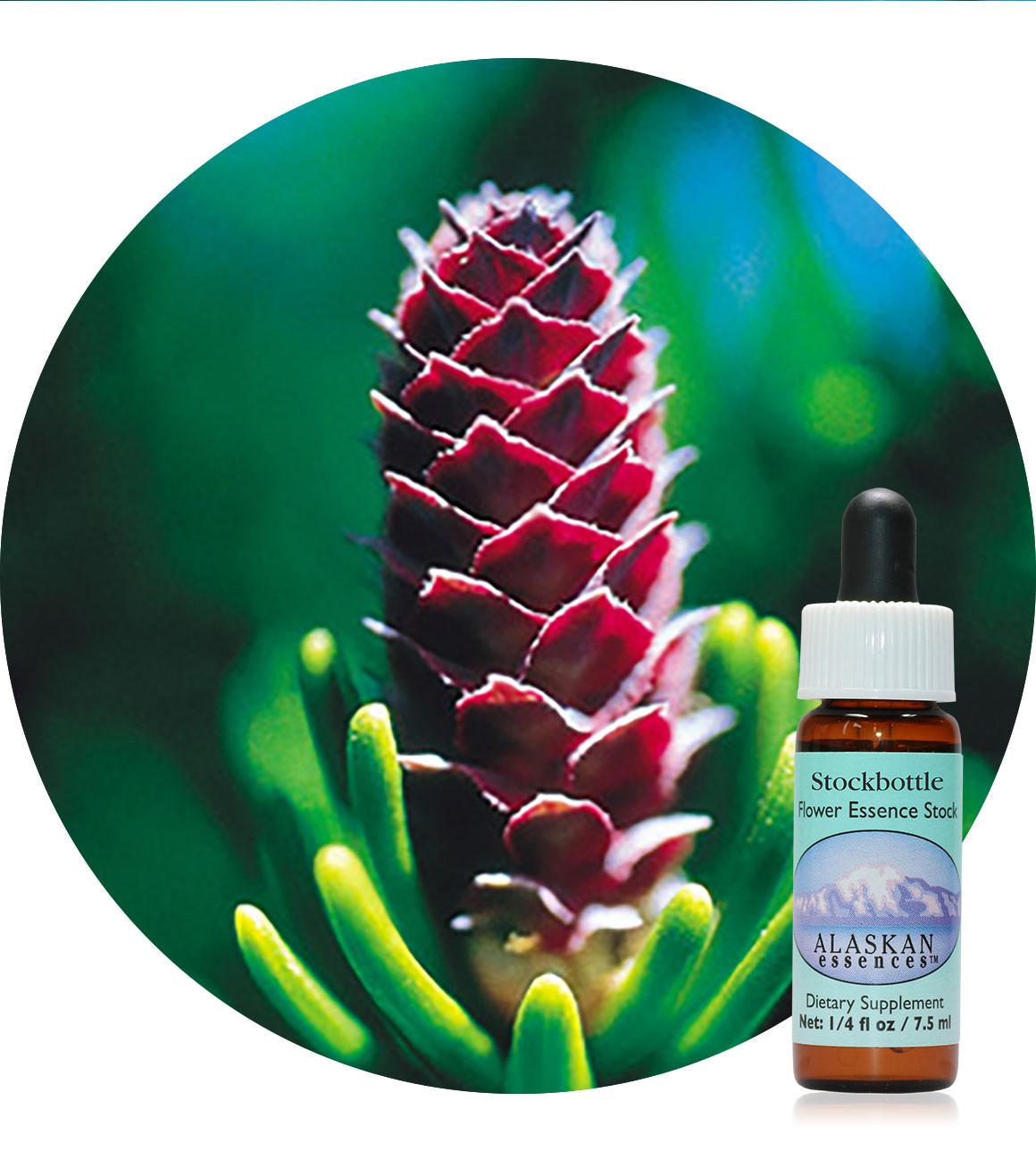 White Spruce 7,5 ml