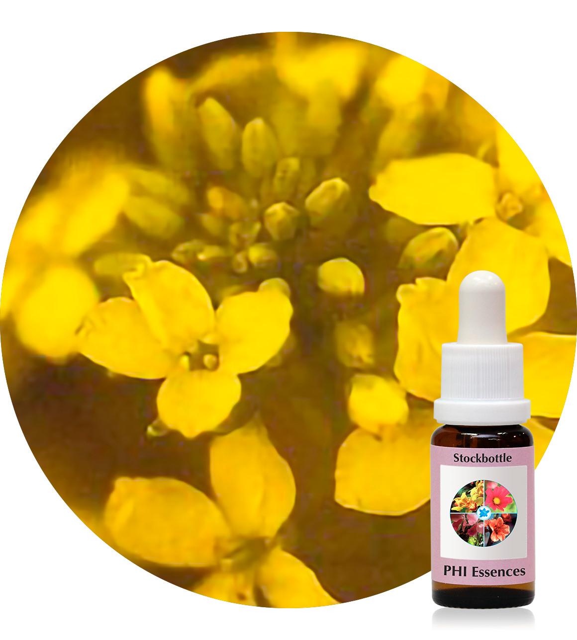 21. Mustard 15 ml