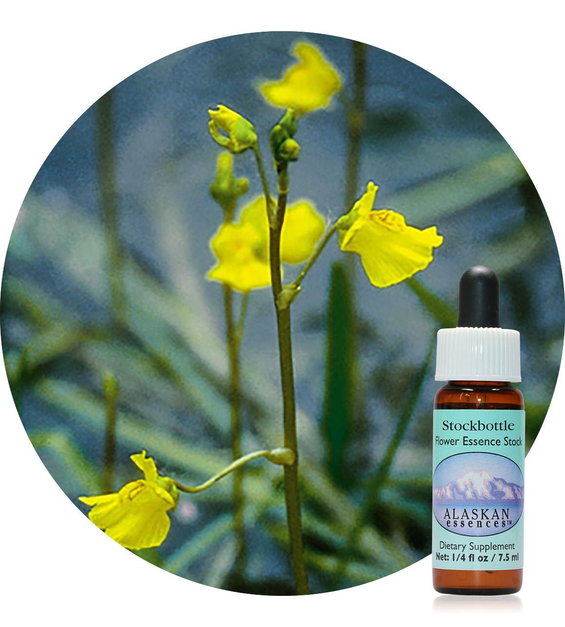 Bladderwort 7,5 ml