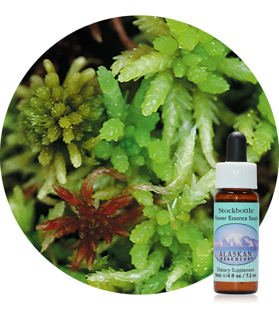 Sphagnum Moss 7,5 ml