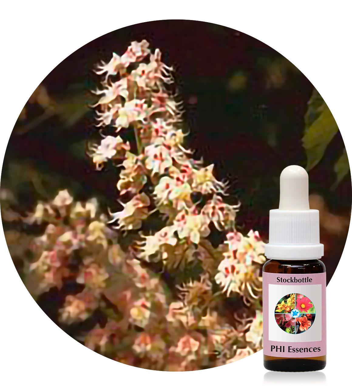 35. White Chestnut 15 ml