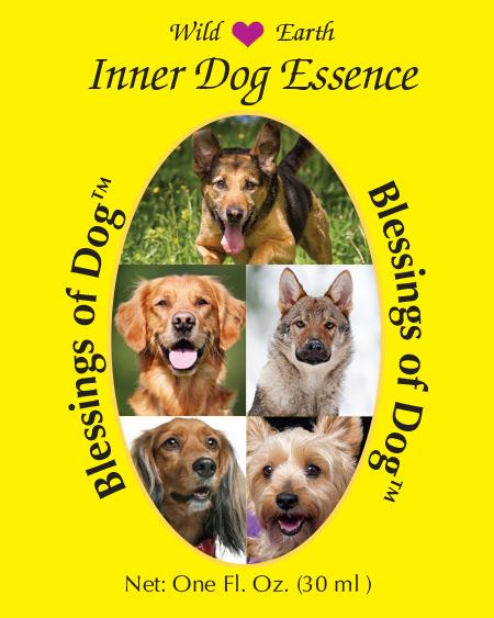 Blessings of Dog