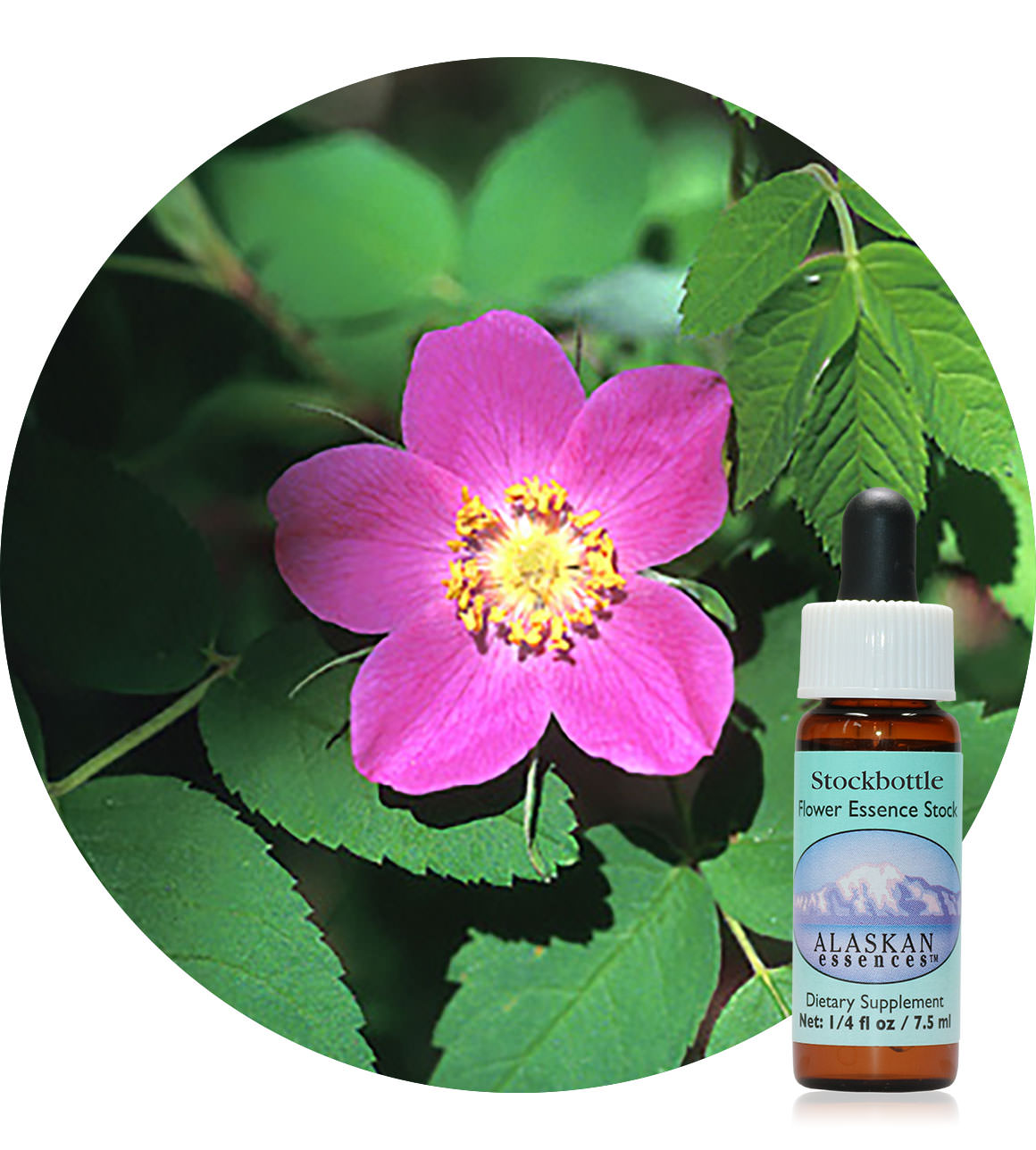 Prickly Wild Rose 7,5 ml