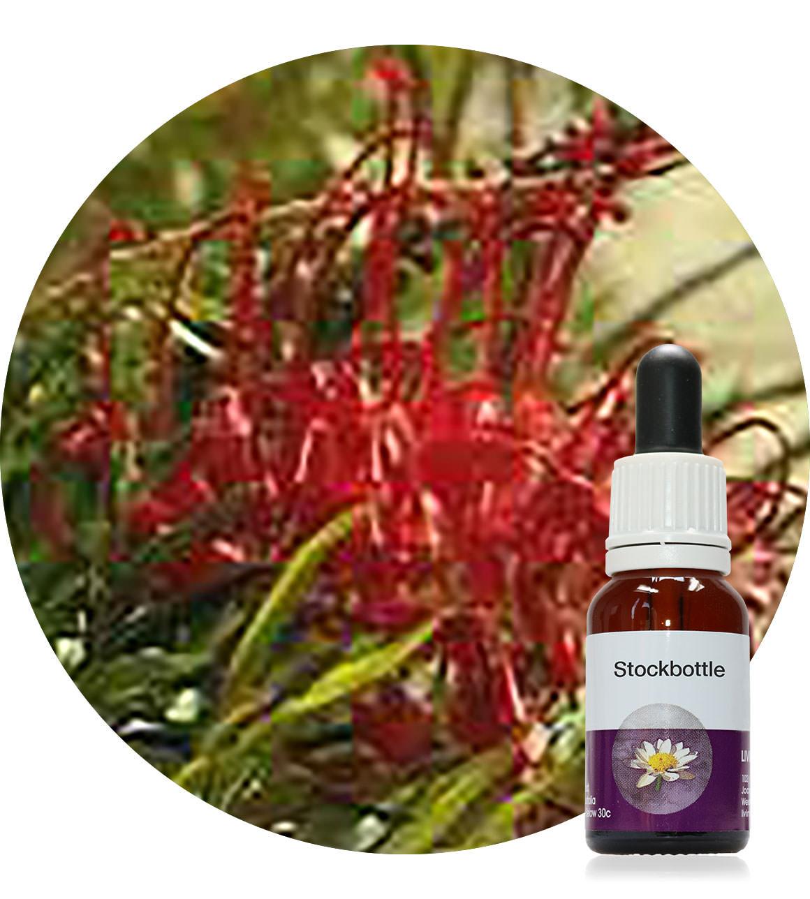19. Fuchsia Grevillea