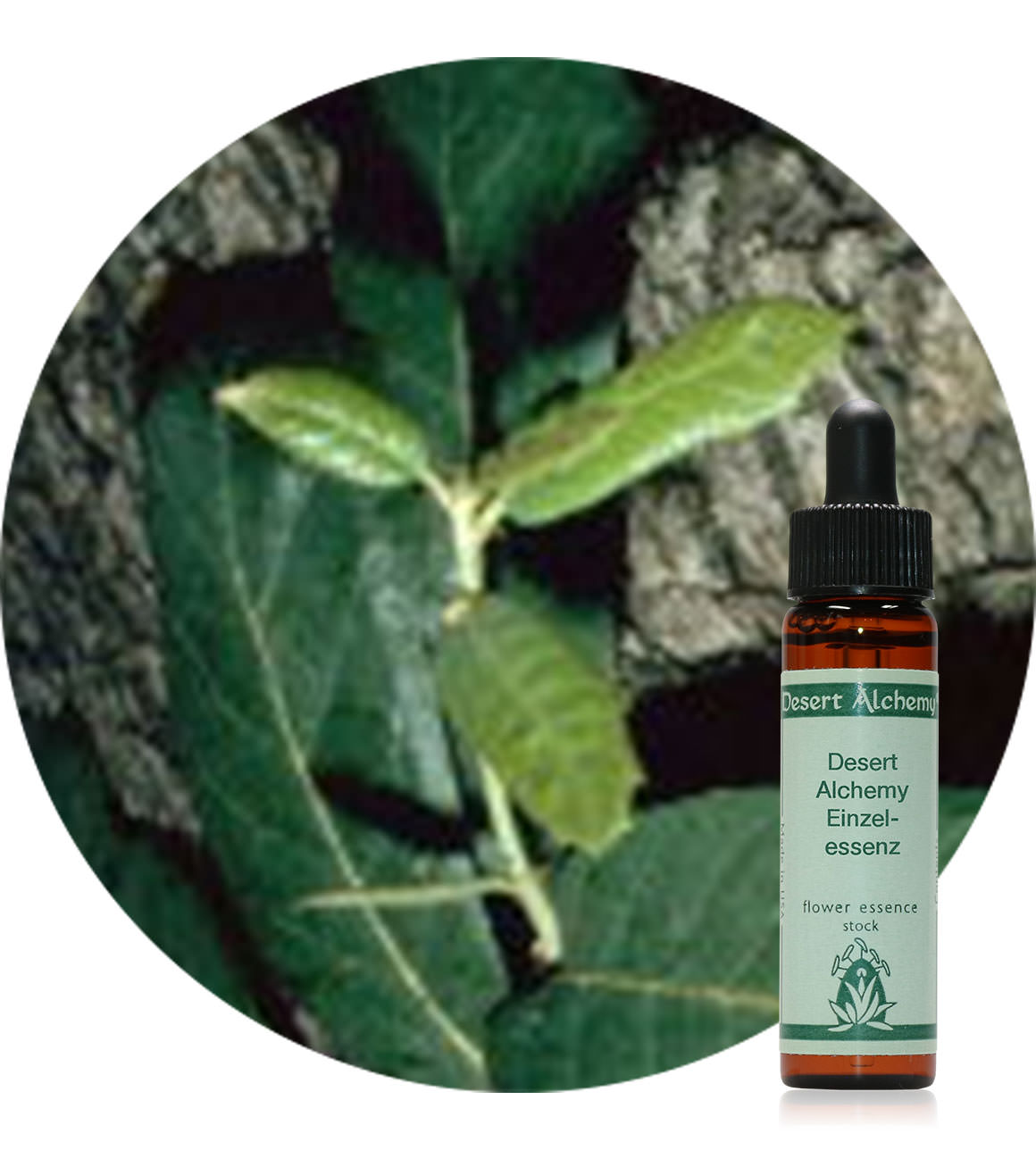 004. Arizona White Oak