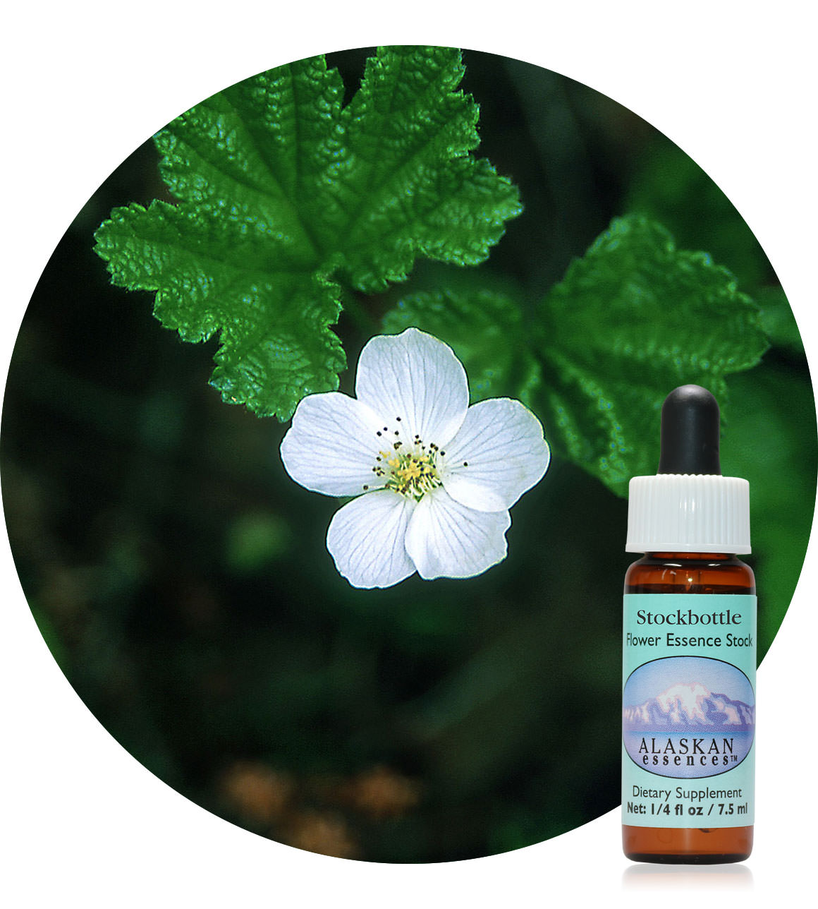 Cloudberry (F) 7,5 ml