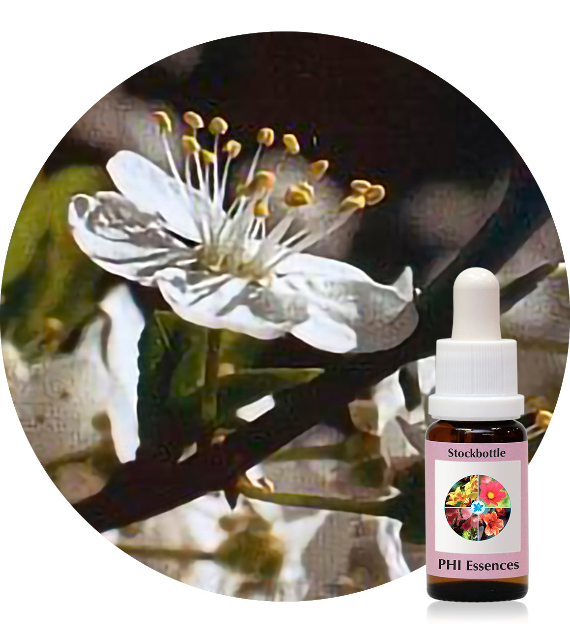 06. Cherry Plum 15 ml