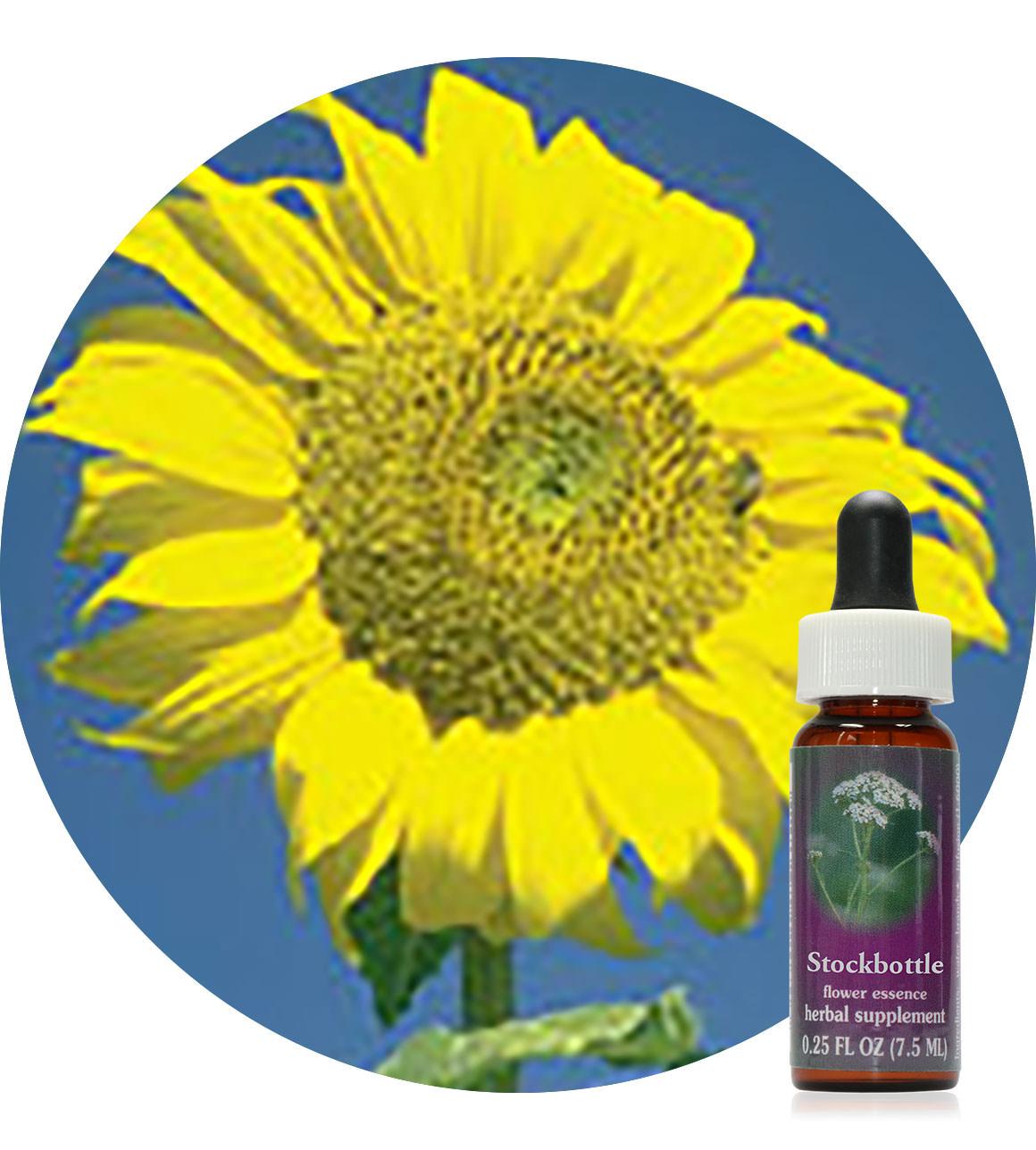 092. Sunflower